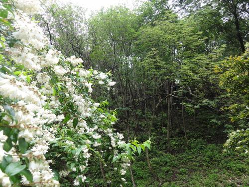定例活動日:雨中の草刈り_c0108460_18522976.jpg
