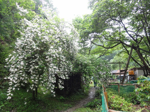 定例活動日:雨中の草刈り_c0108460_18532737.jpg