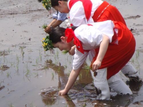 第5回献饌田御田植祭_f0168873_21444934.jpg