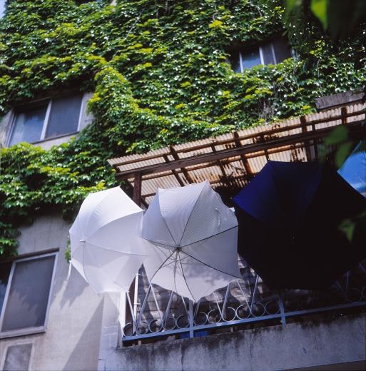 関東梅雨入り~~_f0115475_2355180.jpg