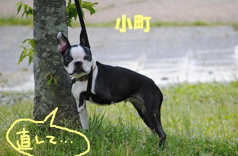 白黒BBQ@琵琶湖_d0003977_18324871.jpg