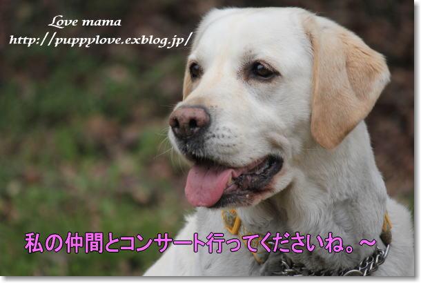 b0136683_20252094.jpg