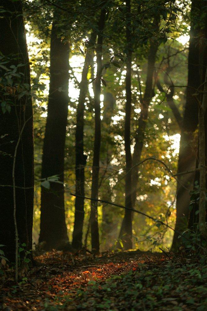 朝日が木々の間から・・・_c0124795_0264683.jpg