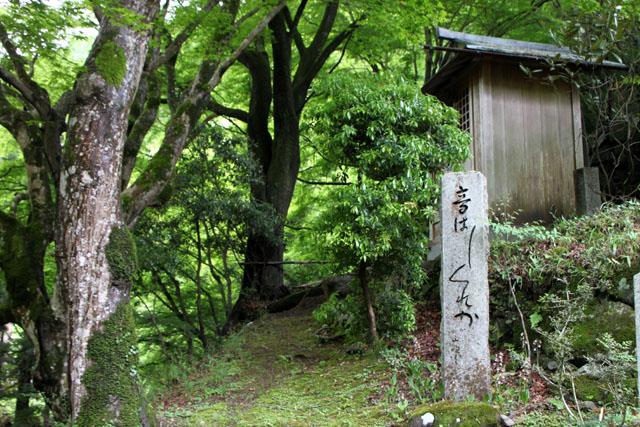 杉坂 地蔵院_e0048413_21142049.jpg