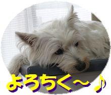 f0084422_802074.jpg