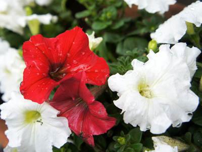珈琲。そして、花。_a0026127_17544977.jpg