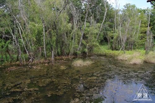 105 Sheldon Lake State Park ~野生のワニ~_c0211532_2245686.jpg