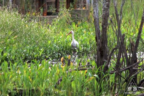 105 Sheldon Lake State Park ~野生のワニ~_c0211532_2252631.jpg