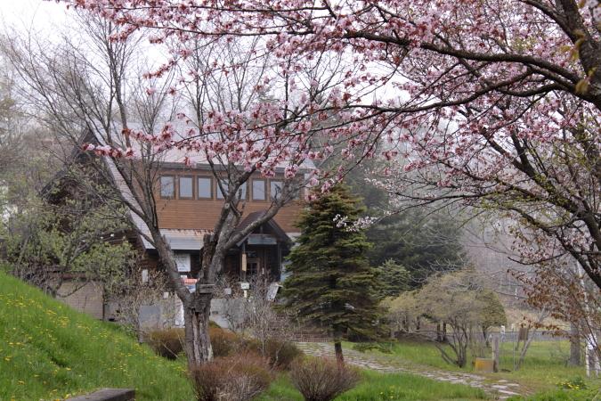 踊子草におどろきそう 5月28日_f0113639_1711650.jpg