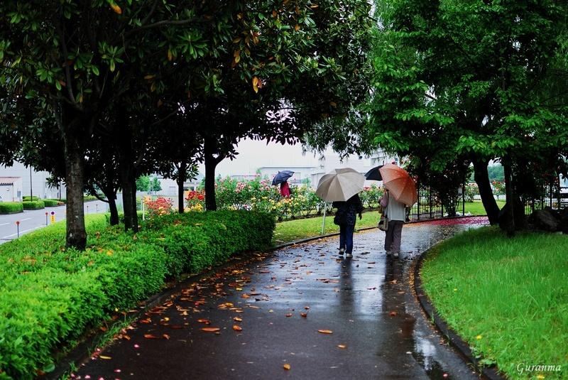 雨の公園・_c0124055_21471031.jpg