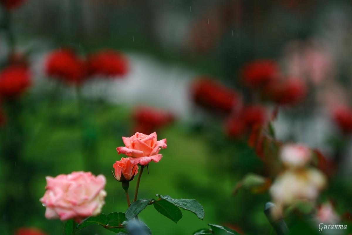 雨の公園・_c0124055_21474168.jpg