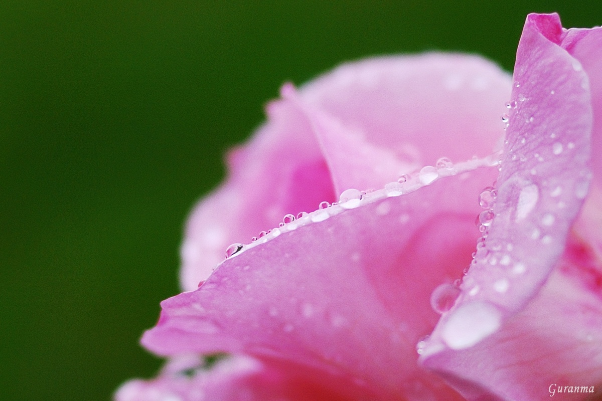 雨の公園・_c0124055_21491353.jpg