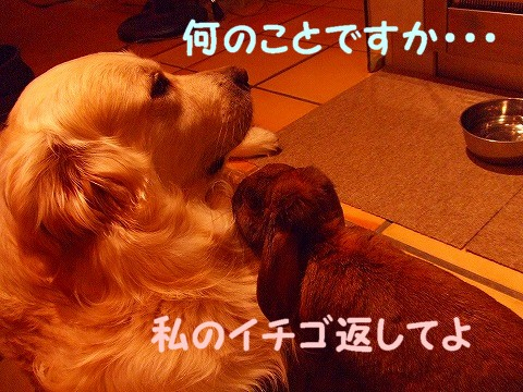 a0104162_16323641.jpg