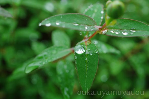 あめ雨_a0157263_23402690.jpg
