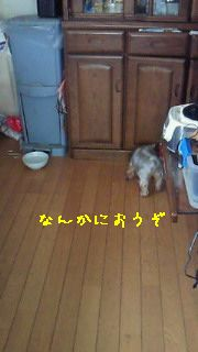 f0192863_16473210.jpg