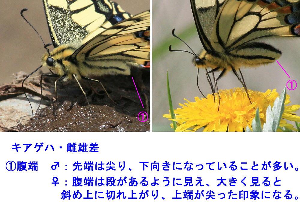 a0146869_4532950.jpg