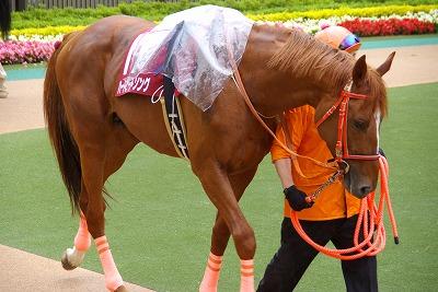 目黒記念は、最軽量の8歳馬キングトップガンが、嬉しい初重賞制覇_b0015386_20373374.jpg