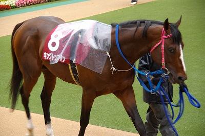 目黒記念は、最軽量の8歳馬キングトップガンが、嬉しい初重賞制覇_b0015386_20381816.jpg
