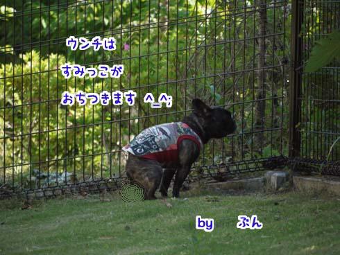 b0134197_15505223.jpg