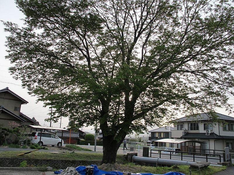 大雨と辰己隊長_f0076731_1885891.jpg