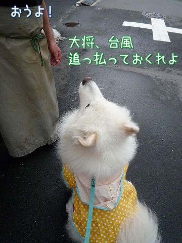 毎日雨雨カッパッパ_c0062832_16413247.jpg