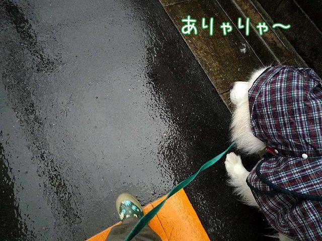 毎日雨雨カッパッパ_c0062832_16413766.jpg