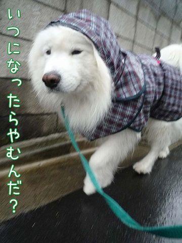 毎日雨雨カッパッパ_c0062832_16415121.jpg