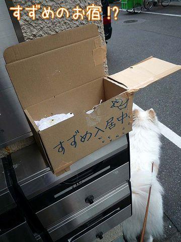 金曜日のおば散歩_c0062832_4123562.jpg