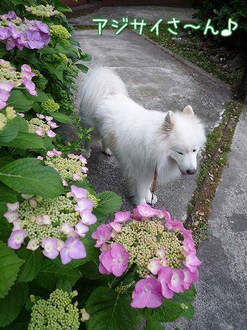 金曜日のおば散歩_c0062832_4124217.jpg