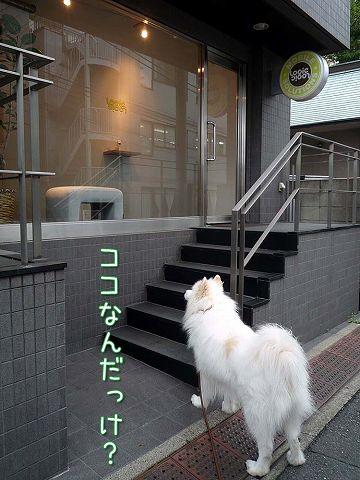 金曜日のおば散歩_c0062832_4124727.jpg