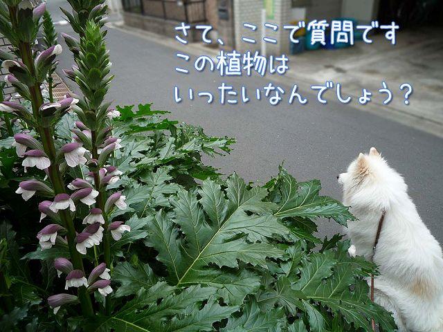 金曜日のおば散歩_c0062832_4132446.jpg