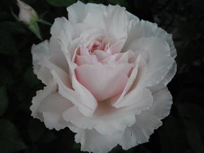 ROSE FESTA ありがとうございました!_e0086738_2114099.jpg