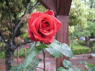 今日も雨なので花便りです。_a0139242_861318.jpg