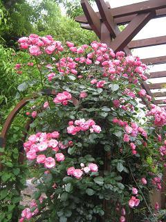 今日も雨なので花便りです。_a0139242_88620.jpg