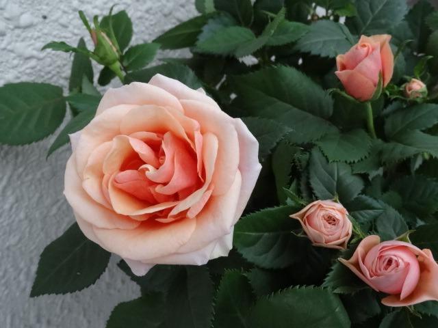 今日の庭_d0165645_20232938.jpg