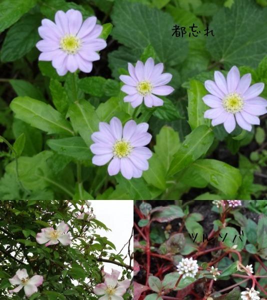 今日の庭_d0165645_20295142.jpg