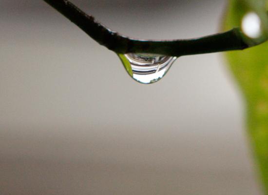 雨_a0155464_20533378.jpg