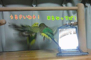 f0196665_2335550.jpg