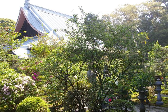 「入正醤油」の菩提寺西福院(東庄町)は牡丹の名所_c0014967_17441347.jpg