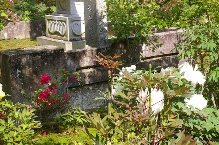 「入正醤油」の菩提寺西福院(東庄町)は牡丹の名所_c0014967_17443984.jpg
