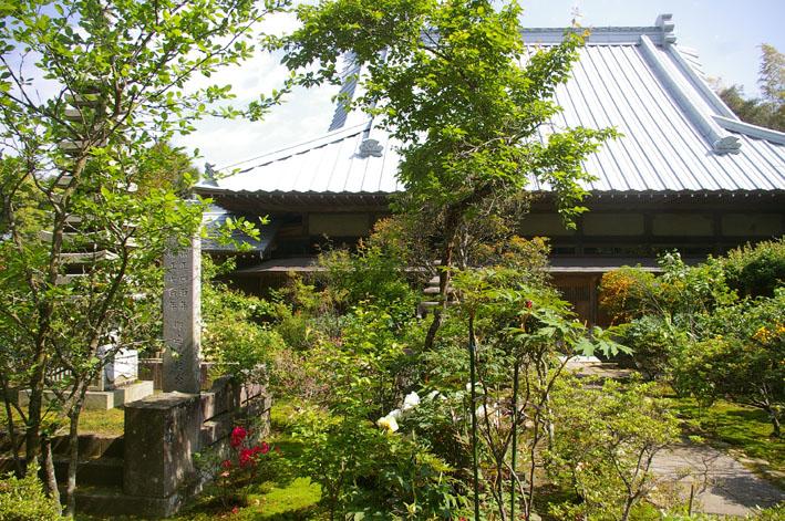 「入正醤油」の菩提寺西福院(東庄町)は牡丹の名所_c0014967_17454347.jpg