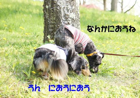 f0195891_2010716.jpg