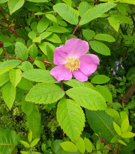 庭木への薬剤散布 _a0136293_16182824.jpg