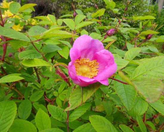 庭木への薬剤散布 _a0136293_16192787.jpg