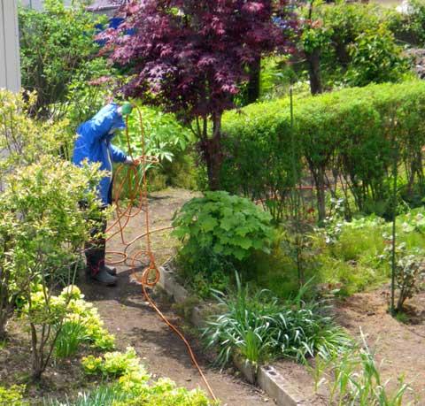 庭木への薬剤散布 _a0136293_165023.jpg