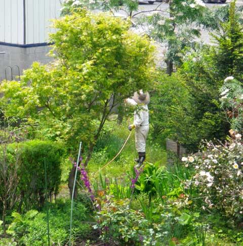 庭木への薬剤散布 _a0136293_1653564.jpg