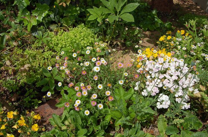 「花園」_b0087994_19202876.jpg
