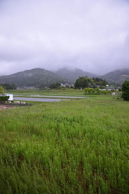 朝から強い雨_a0026295_1622221.jpg