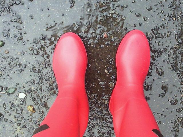 雨です(^-^)_c0140599_1213465.jpg