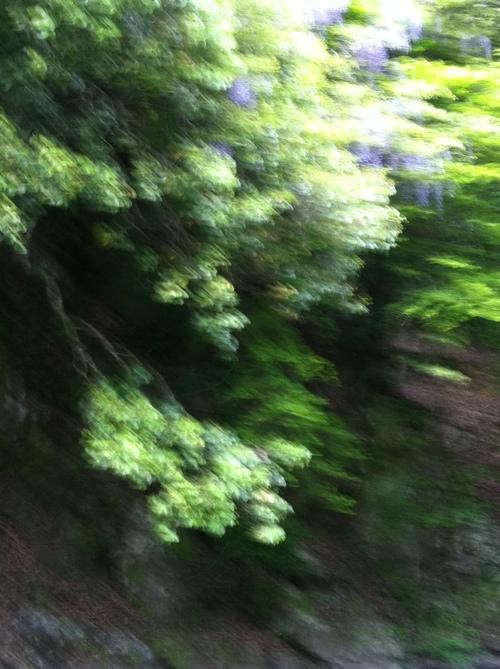 d0078609_2011650.jpg